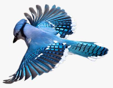Outdoor DIY Birdsaver Craft on the library terrace (Registration)