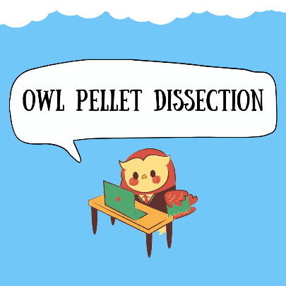 Owl Pellet Dissection via ZOOM (Registration / Limited Space)