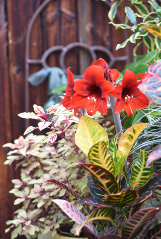Houseplants by Design: A Virtual Lecture By Tovah Martin
