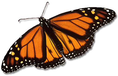 Outdoor Monarch Butterfly Migration Storytime and Craft on the library terrace